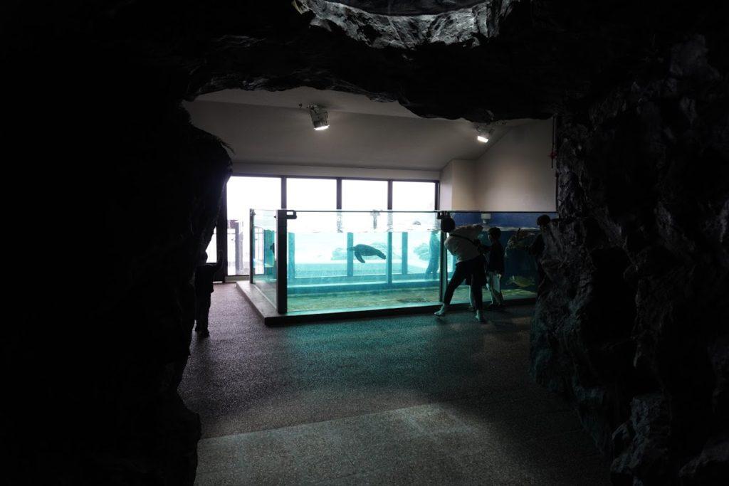 足摺海洋館SATOUMI 2プロローグ ウミガメ
