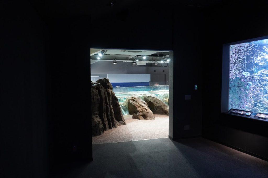 足摺海洋館SATOUMI 2bサンゴ