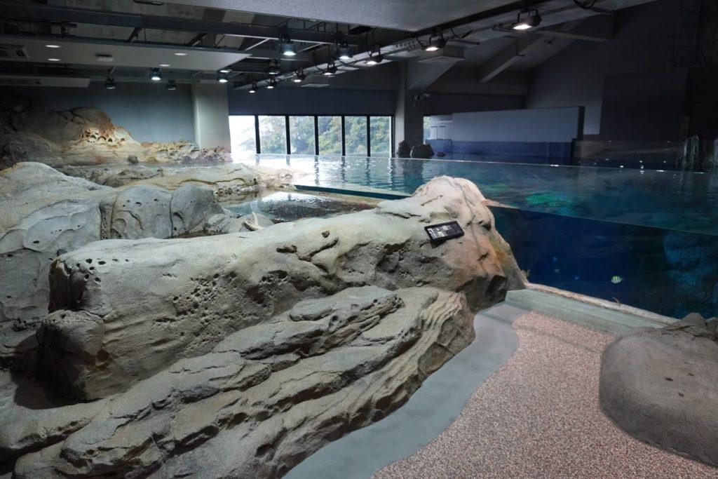 足摺海洋館SATOUMI 竜串湾大水槽