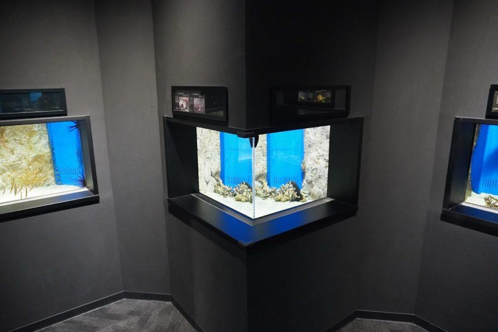 足摺の海 サツマカサゴ グアムカサゴ