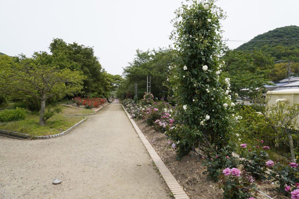 亀水バラ園の散策路