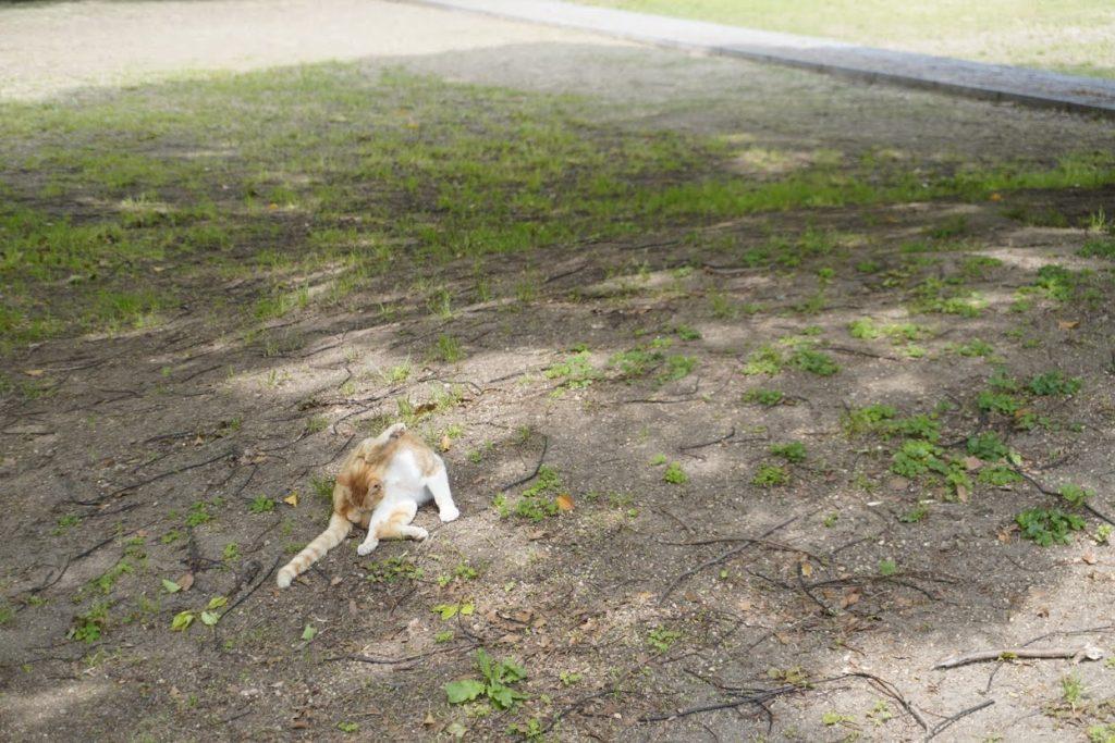 亀水バラ園の猫