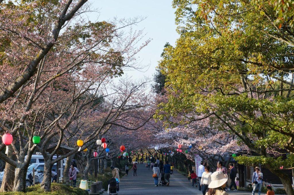 咲き始めの公渕公園のサクラ並木