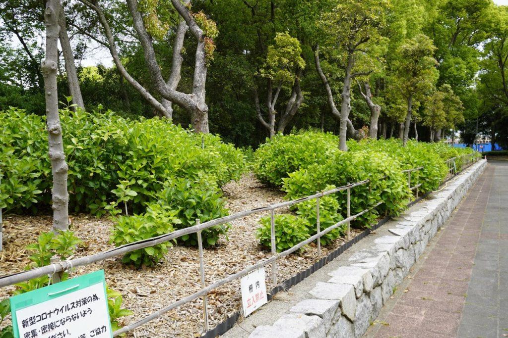 坂出番の州公園アジサイの花壇