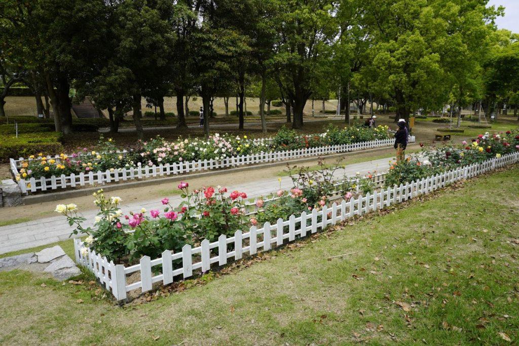 坂出番の州公園バラ園