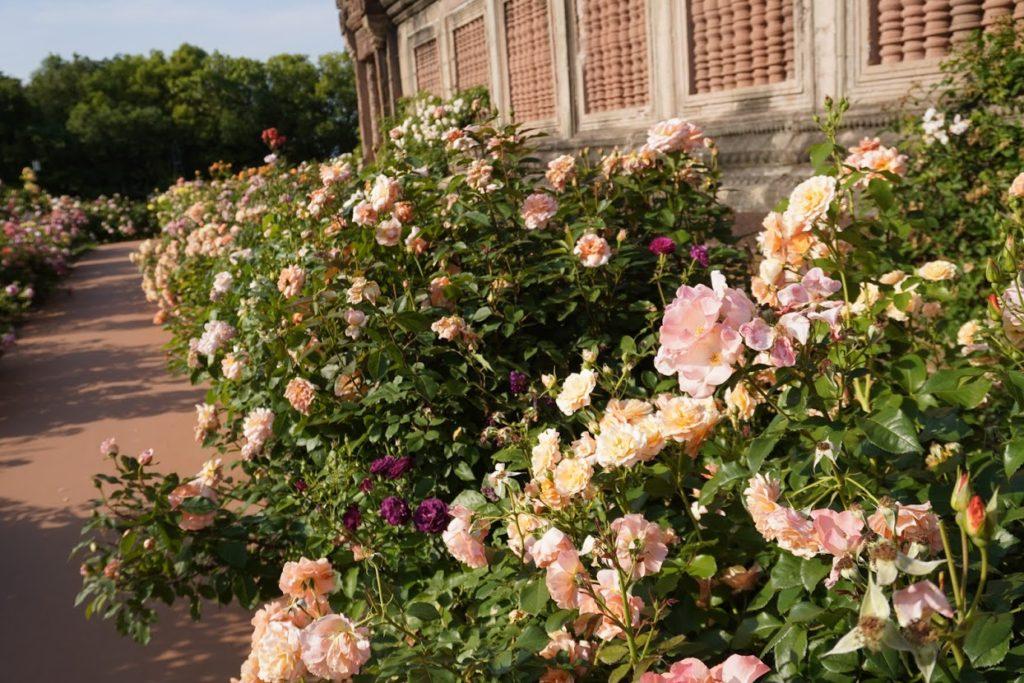 レオマ オリエンタルトリップ大バラ庭園
