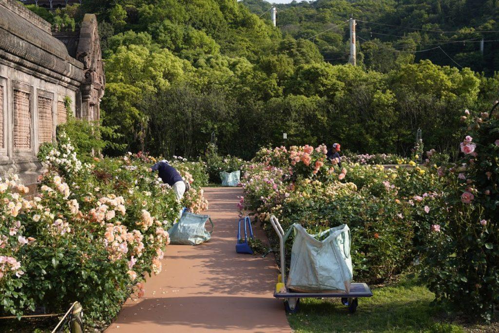 レオマ オリエンタルトリップ大バラ庭園の剪定作業