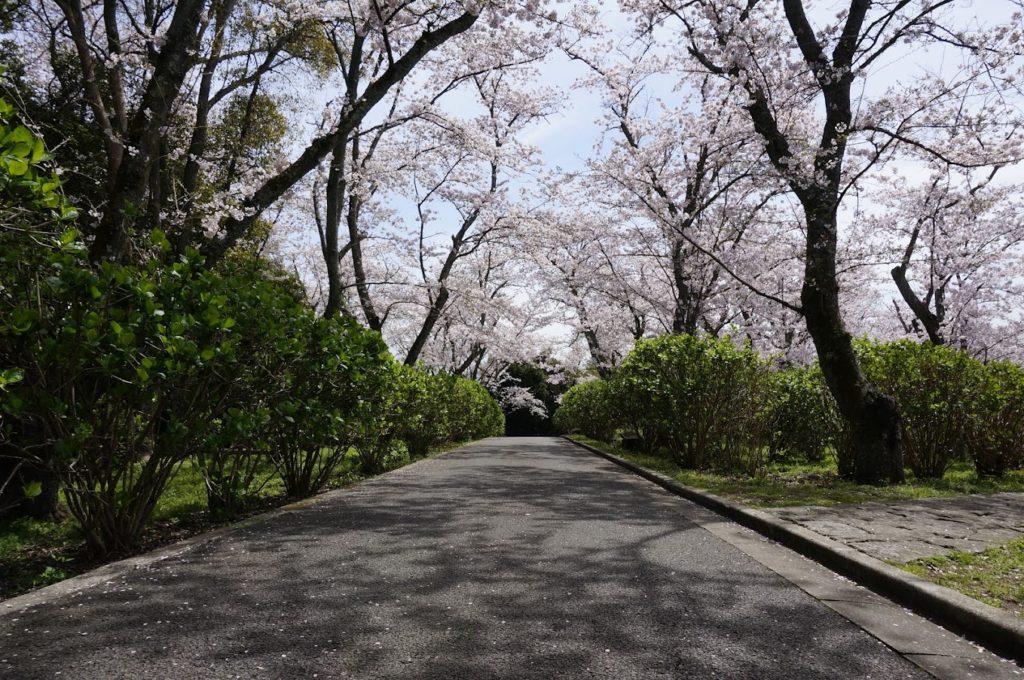 紫雲出山の桜(2016年4月撮影)