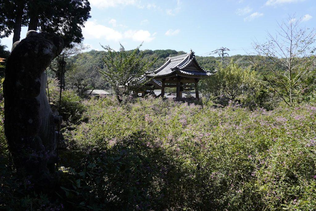 塩江最明寺境内の萩